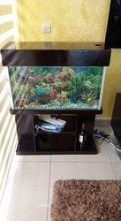 Aquarium peint coraillé