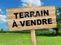 Vente Terrain 2 ha -  Mbourokh Cissé