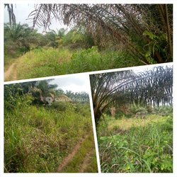 Terrains agricoles 10 ha - Grand Yapo  - Agboville