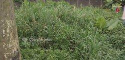 Terrain 200 m² - Akwa Nord Douala