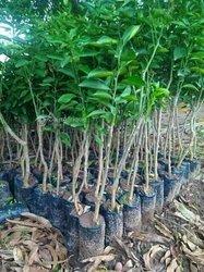 Produits forestiers
