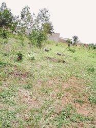 Terrain - Ouedo