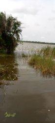 Terrain 9 hectares  - Savi Gakpe