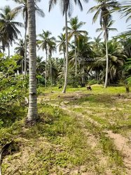 Terrains agricoles 1500  m2 - Jacqueville