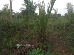 Terrains agricoles - Noepé