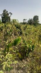 Terrain agricole 4 ha - Sikensi Elibou