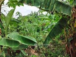 Vente terrain - Makepe Missoke sic cacao