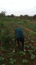 Vente Terrain agricole - Poute