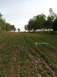 Terrain agricole 1000 m² - Yamoussoukro