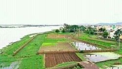 Terrain agricole 2173 m² - Sotuba