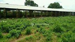 Terrain agricole 2 ha - Moutougoula