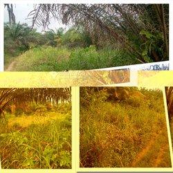 Terrains agricoles 69 ha - Daoukro