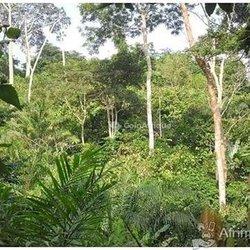 Terrain agricole 60 ha -  Agboville