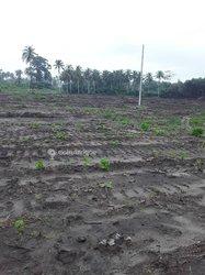 Terrains agricoles 500 m2 - Jacqueville