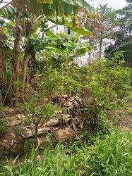 Terrain - Kotto Douala