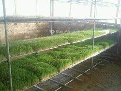 Formation en production de fourrage vert