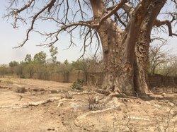 Vente Terrain 6 hectares - Ouaga 2000