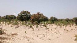 Verger fruitier 4 ha - Santhie Darra