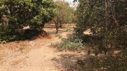 Verger fruitier 5000 m² - Ndoyene 1