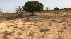 Terrains agricoles 1 ha - Ndiar