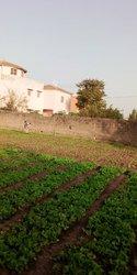 Terrain 300 m² - Popenguine