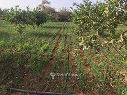 Terrains agricoles 467000 m² - Thies