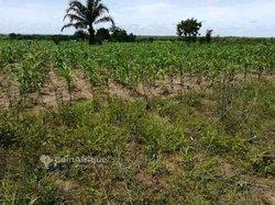 Terrain agricole 100 ha - Agou
