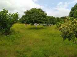 Vente Terrain agricole 15000 m² - Mbour-Sandiara