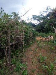Terrain agricole 3,5 ha  -  Salmoa Moungo