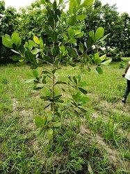Vente Terrain agricole 30 ha - Agbelouvé-Gamé