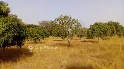 Vente Terrain agricole 10000 m² - Mbour