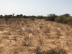 Terrains agricoles 3 ha - Ndiar