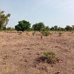 Vente Terrain agricole - Sissili