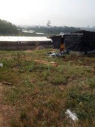 Vente ferme 20000 m2 - Agboville