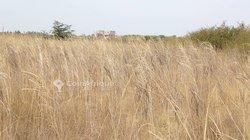 Terrains agricoles 10 ha - Commnube de Sindia