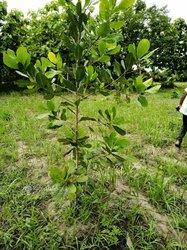 Terrain agricole 30 ha  - Gamé