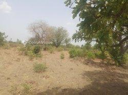 Terrains agricoles 7500 m2 - Koubri