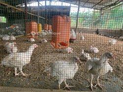 Vente Ferme d'élevage 1 hectare - hangars de 200 m² - Assahoun