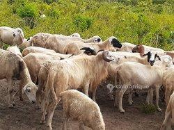 Vente Ferme agricole 12 ha - Agbelouwoè