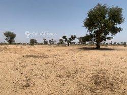 Terrains agricoles 7.03 ha - Keur Franck Fall