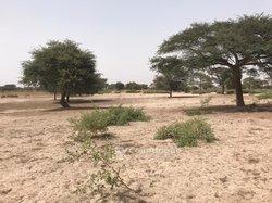 Terrain agricole 2,41 hectares - Keur Amary Coumba