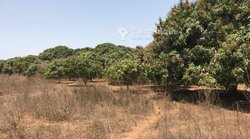 Verger agricole 10 hectares - Gap