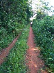 Terrains agricoles 20 ha - Matomb village