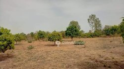 Terrains agricoles 5 ha - Koubri