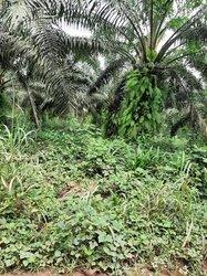 Terrain agricole 8 ha - PK 103