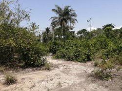 Terrains agricoles 1 - 2 - 5 ha - Grand-lahou