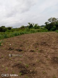 Terrains agricoles 20 ha - Toffo