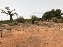 Verger fruitier de 3297 m² - Ngadiaga