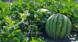 Terrains agricoles 1600 m² - Niamey