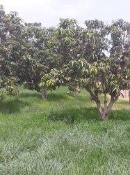 Verger 3 hectares  - Notto